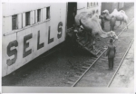 Sells Floto stock car unloading in Kansas ...1918.jpg