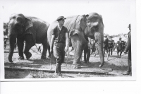 Working the 'bulls' on the Sells Floto Circus...1915.JPG