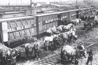 Unloading the stock on the 101 Ranch Wild West.JPG