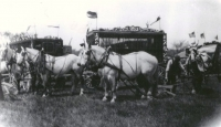 Sparks Circus cage wagons and white horses     1928.jpg