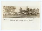 Ringling Bandwagon & 8 horse hitch     1884.jpg
