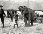 Teddy Roosevelt III, grandson of the president, visits the RB&BB menagerie in Washington, DC in May,