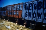 Foley and Burke wagon line up    1950's.jpg