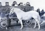 Gollmar Bros.......1915.jpg
