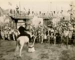 Siebrand Bros-(Capt.H.Clark on the horse)....1954.jpg