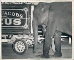 Terrell - Jackobs...1943.jpg
