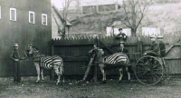 Zebra cart.JPG