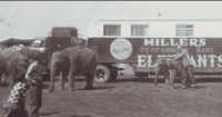 Woodcocks Elephants....1960's.png