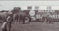 Woodcocks Elephants....1960's.png