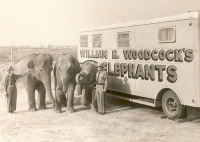 woodcocks elephants.jpg