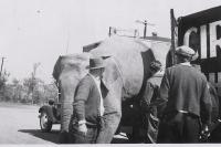 Unloading the 'bull' trauck on the Downie Bros.....1931.JPG