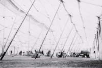 Under 'Big Bertha'..Ringling...1930's.JPG