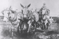 Stage coach & driver on the 101 Wild West Ranch Shows.JPG