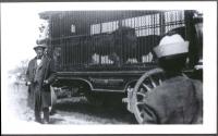 Sparks Lion Cage...1928.JPG