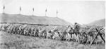 Ringling zebra herd..1930's.jpg