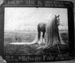 long haired pony.jpg