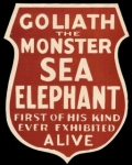 Goliath the 'monster Sea Elephant'.jpg