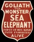 Goliath the 'monster Sea Elephant'.jpg